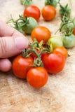 Tomate-cerise de cueillette de la main de la femme sur le conseil en bois Images stock