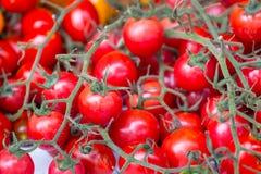 Tomate-cerise rouge image libre de droits