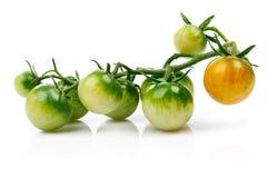 Tomate-cerise verte de groupe à la branche D'isolement Photo stock