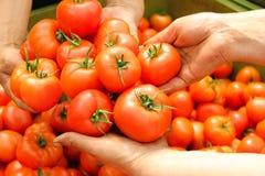 Tomate chez les mains des femmes Image stock
