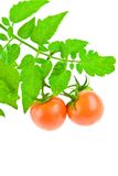 Tomate com folha do tomate Fotografia de Stock Royalty Free