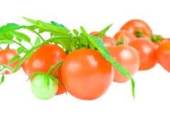 Tomate com a folha do tomate isolada Imagens de Stock Royalty Free