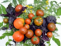 Tomate, comida, verdura, rojo, tomates, fresco, sano, verde, orgánico, maduros, agricultura, planta, fruta, cereza, ensalada, ver foto de archivo libre de regalías