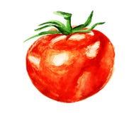 Tomate d'aquarelle Photographie stock libre de droits