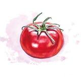 Tomate d'aquarelle avec la tache colorée photos libres de droits