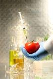 Tomate da terra arrendada da mão com seringa Foto de Stock