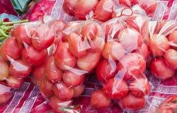 Tomate dans le sachet en plastique Photos libres de droits