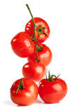 tomate de branchement Photographie stock
