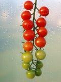 Tomate de cereja Imagem de Stock