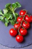Tomate de cereja com salada verde Fotografia de Stock