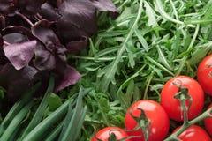 Tomate de cereja, manjericão, rúcula e close-up da cebola verde foto de stock