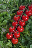 Tomate de cereza fresco con el parsel verde Foto de archivo