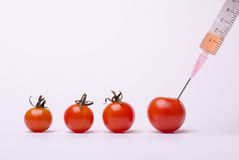 Tomate de GMO Imagem de Stock Royalty Free