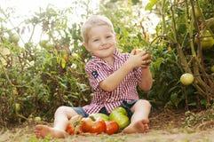Tomate de la cosecha del niño joven en jardín Foto de archivo libre de regalías