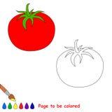 Tomate de la historieta que se coloreará Imagen de archivo libre de regalías