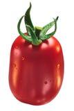 Tomate de prune de Roma VF, chemins image stock