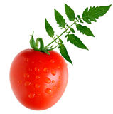 Tomate de Roma image stock