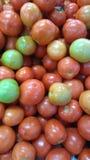 Tomate de Sulawesi sul Fotos de Stock