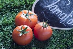 Tomate de três vermelhos na grama no inverno imagem de stock royalty free