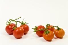tomate de vigne sur un fond blanc Photographie stock