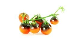 Tomate del negro de la rosa del añil del tomate Foto de archivo