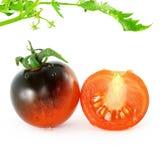 Tomate del negro de la rosa del añil del tomate Imagenes de archivo