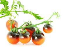 Tomate del negro de la rosa del añil del tomate Fotos de archivo