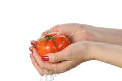 Tomate in den Palmen stockbild