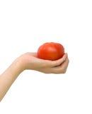 Tomate in der Palme Ihrer Hand lizenzfreies stockbild