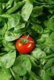 Tomate e alface ondulada Imagem de Stock