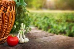 Tomate e cebola na tabela de madeira Fotografia de Stock