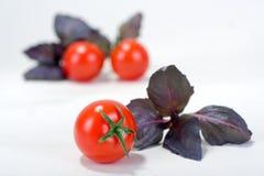 Tomate e manjericão de cereja Foto de Stock Royalty Free