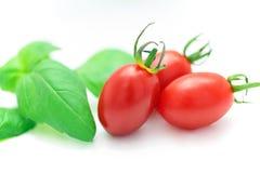 Tomate e manjericão frescos Imagens de Stock Royalty Free