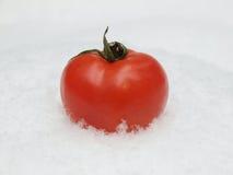 Tomate in einem Schnee Stockbilder