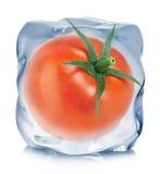 Tomate eingefroren in der Eiswürfelnahaufnahme auf weißem Hintergrund Stockbild