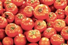 Tomate erhalten verkauft Stockfotos