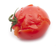 Tomate esmagado Imagens de Stock Royalty Free