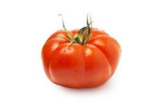 Tomate espagnole photo stock
