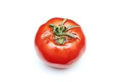Tomate estragado Foto de Stock Royalty Free