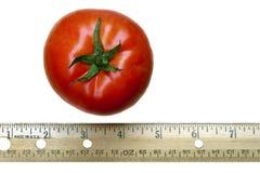 Tomate et grille de tabulation rouges sur le blanc Photos stock