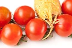 Tomate et le cancer Photos stock