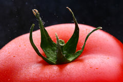 Tomate fraîche de grapa Photographie stock libre de droits