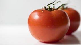 Tomate fresco isolado no branco Fotografia de Stock Royalty Free