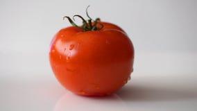Tomate fresco no branco Imagens de Stock Royalty Free