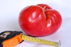 Tomate géante Photos libres de droits