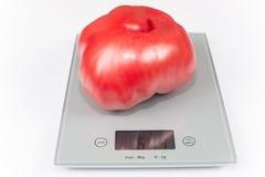 Tomate gigante Imagenes de archivo
