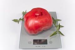 Tomate gigante Imagen de archivo
