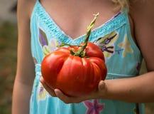 Tomate gigantesco guardado por uma criança imagens de stock royalty free