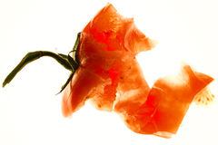 Tomate heurtée Photos stock
