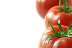 Tomate im Abschluss oben Lizenzfreies Stockbild